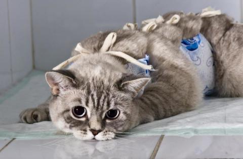 О проведении Всемирного дня кастрации и стерилизации животных